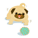 Happy Pug dog and a ball  Stock Images