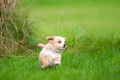 Happy Puppies Royalty Free Stock Images