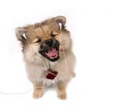 Happy Pupply Listening to Music Royalty Free Stock Photography