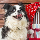 Happy Puppy with Christmas gifts Royalty Free Stock Photos