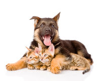Happy puppy dog embracing little kittens. isolated on white Stock Photos