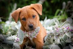 Happy puppy. A happy puppy in a garden royalty free stock photos