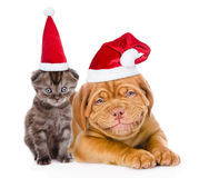 Happy puppy and tiny kitten in red santa hats lying together. is Royalty Free Stock Photo