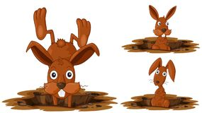 Happy Rabbit on White Background. Illustration Royalty Free Stock Images