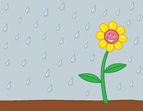 Happy Rainy Flower. A smiling flower who is happy to be getting some rain Stock Images
