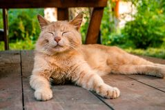 A happy red cat lies in the summer house stock image