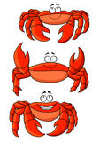 Happy red ocean cartoon crabs with large claws. Happy cartoon ocean red crabs characters with large claws. Addition to children book, seafood, marine emblem and Royalty Free Stock Photography