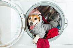 Happy relaxed house work helper lying inside washing machine. Dog in grey hood looking. Laundry and dry cleaning pet service Stock Image