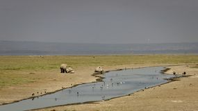 Happy Rhinos in Naivasha stock images