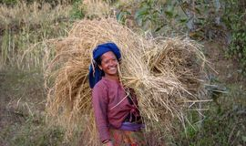 Happy rice field worker, woman carries a big bundle of straw, Nepal stock image