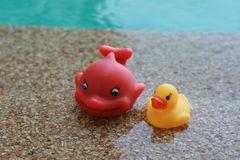 Happy rubber fish and ducky floating toy in daylight Stock Photos