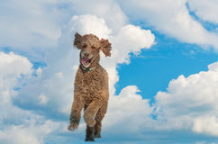 Happy Running dog in Clouds Stock Image
