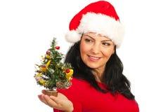 Happy Santa woman holding tree Stock Photos