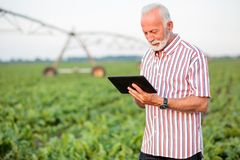 Happy and satisfied senior agronomist or farmer using a tablet in soybean field royalty free stock photo