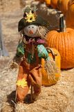 A happy scarecrow in the pumpkin patch stock photo