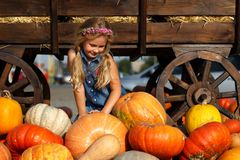 Happy school girl sitting between pumpkins at local farmer market in sunny autumn day. Stock Images