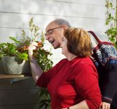 Happy senior couple. Happy retired couple having fun with each other over harvesting a strawberry, symbolising the seasons of life and being content with it Royalty Free Stock Image