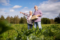 Happy senior couple with box of squashes at farm Stock Image