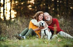 A senior couple with a dog in an autumn nature at sunset. A happy senior couple with a dog on a walk in an autumn nature at sunset royalty free stock photo