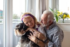 Happy senior couple with dog. Happy senior couple holding dog at home and enjoying together in moment stock photography