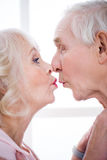 Happy senior couple kissing at home. Side view of happy senior couple kissing at home Royalty Free Stock Image
