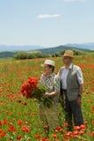 Happy senior couple picking flowers stock photo
