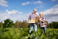 Happy senior couple with squashes at farm Stock Images