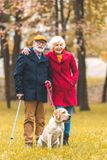 happy senior couple walking with labrador retriever dog in autumn royalty free stock images