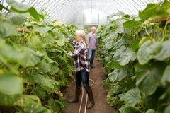 Happy senior couple working at farm greenhouse Royalty Free Stock Photos