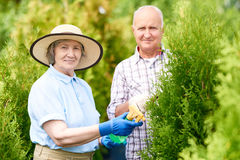 Happy Senior Couple Working in Garden Together stock photo