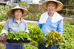 Happy Senior couple working in vegetables garden Royalty Free Stock Images