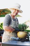 Happy senior female gardener potting new plant. Happy senior woman planting new plant in terracotta pot on a counter in backyard. Senior female gardener working royalty free stock photo