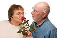 Happy Senior Husband Giving Red Rose to Wife Stock Photo