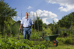 Happy Senior Man In Allotment Stock Photography
