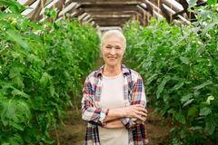 Happy senior woman at farm greenhouse Royalty Free Stock Image