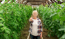 Happy senior woman at farm greenhouse Royalty Free Stock Images