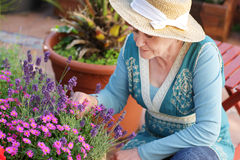 Happy senior woman with flowers Royalty Free Stock Photos