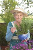 Happy senior woman with flowers Stock Images