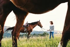 A senior woman holding a horse by his lead on a pasture. Royalty Free Stock Photos
