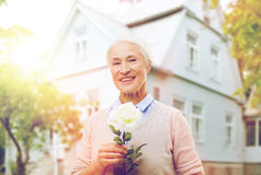 Happy senior woman with rose flower at home. Age, holidays and people concept - happy smiling senior woman with white rose flower at home Royalty Free Stock Images