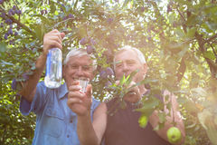 Happy seniors with alcohol under fruit trees Stock Photo