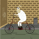 Happy sheep in bicycle Stock Photography