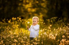 Happy small caucasian child blowing dandelion seeds Stock Image