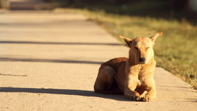Happy smile dog in warm morning light Royalty Free Stock Images