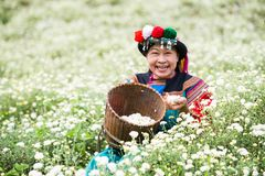 Happy smile hill tribe Chrysanthemum garden. Happy smile hill tribe in Chrysanthemum garden with colorful costume dress royalty free stock photo