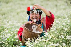 Happy smile hill tribe Chrysanthemum garden. Happy smile hill tribe in Chrysanthemum garden with colorful costume dress stock image