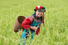 Happy hill tribe in paddy rice field colorful costume dress stock image