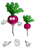 Happy smiling beet vegetable in cartoon style. Cheerful cartoon bright violet beet vegetable character with green sappy leaves and happy smile suited for healthy Royalty Free Stock Photography