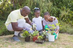 Happy smiling couple gardening with their daughter. At home in garden royalty free stock photography