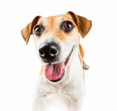 Happy smiling dog Royalty Free Stock Images